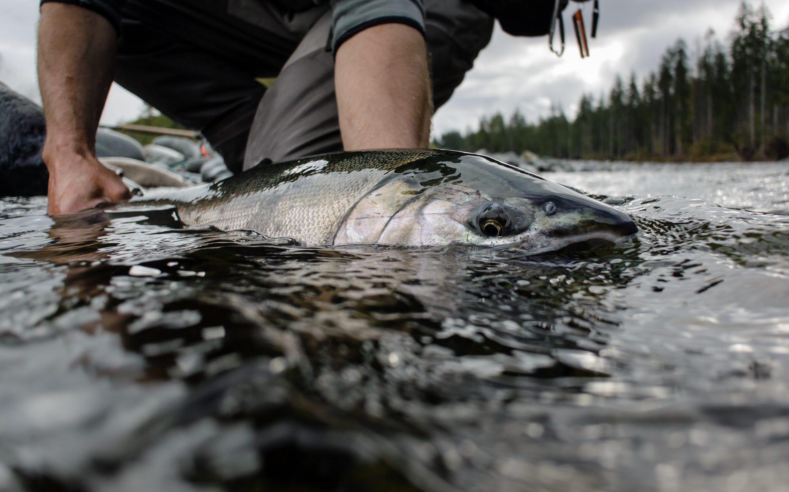Campbell River Salmon Fly Fishing